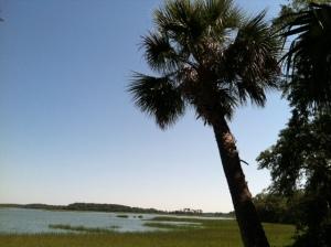 palmetto tree overlooking the marsh